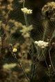 a cobweb ; Comments:9