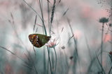 Butterfly`s Dreams ; comments:34