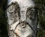 Дървообразът ; comments:51
