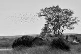 Птиците ... ; Comments:4