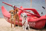 Спасители на плажа ; comments:5