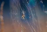 Ловецът на мухи ; comments:24