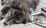 Куче и котка... ; comments:8