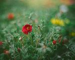 За смисъла на цветята.... ; comments:24