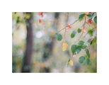 Художникът на име природа - палитра ранна есен ; comments:35
