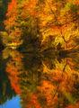 Есен в Родопите ; Comments:6