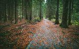 Ранна есен във Витоша ; Коментари:13