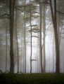 Мъглива приказка ; comments:19