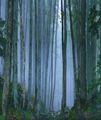 В часа на синята мъгла ; comments:15