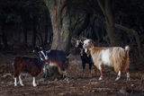 Самотраки - островът на козите ; comments:20