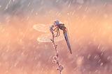 Дъжд и слънце ; comments:26