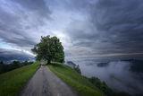 Сам в мъглата ; comments:31