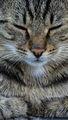 Котешки истории ; comments:6
