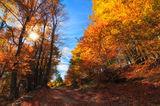Златна есен ; Comments:5