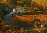 Есен в резерварт Стара река.... ; comments:44