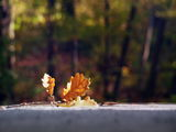 Есента е тук... :) ; Коментари:24