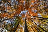 Есенни багри ; comments:13