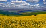 Златна Добруджа ; comments:54