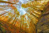 Магията на есента ; comments:8