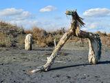 Троянският кон - от плажа Бургас ; Comments:3