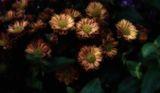 Flowers. ; Comments:8