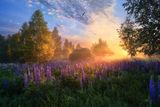 рассвет в лесу ; comments:36