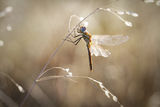 no name ( ID=2106373 ) ; comments:17