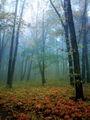 Есенно мъгливо... :) ; Коментари:18