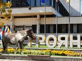 Троянски кон ; comments:30