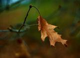 есенно ; Comments:11