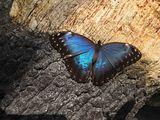 Пеперудка ; comments:4