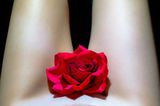Red rose ; comments:1