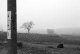 Мъглива утрин-там, където нищо вече не се случва ; comments:27