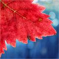 Парченце есен ; comments:26