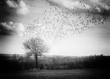 Краят на есента ; comments:33