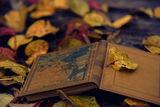 Книгите ни карат да мечтаем. ; comments:7