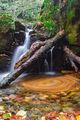Листопад и водопад ; Comments:4