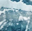 Снежно... ; comments:28