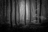 Вледенената гора ; comments:17