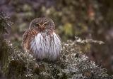 Миловидно птиче с човка в червено ; Comments:46