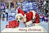 Весела Коледа ; Коментари:1