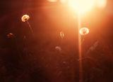 Последно декемврийско слънчево погалване ; comments:5