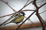В търсене на храна...преди зимъска,когато сняг забръска ; Comments:8