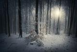 """""""Зимна есен"""" ; Comments:7"""