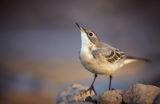 Птиче на мека светлина ; Comments:12