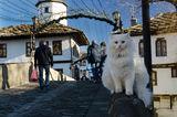 Котката Хайди ; comments:12