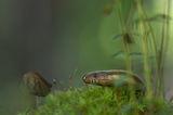 Горски аквариум ; comments:58