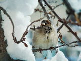 Щом е зима, да е красива... :):) ; Коментари:16