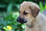 Куче и цвете ; comments:2