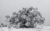Зима, Плана, 2018г. ; Коментари:7